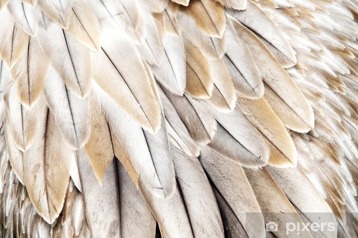 Papier peint vinyle Plumes d'oiseaux - Oiseaux