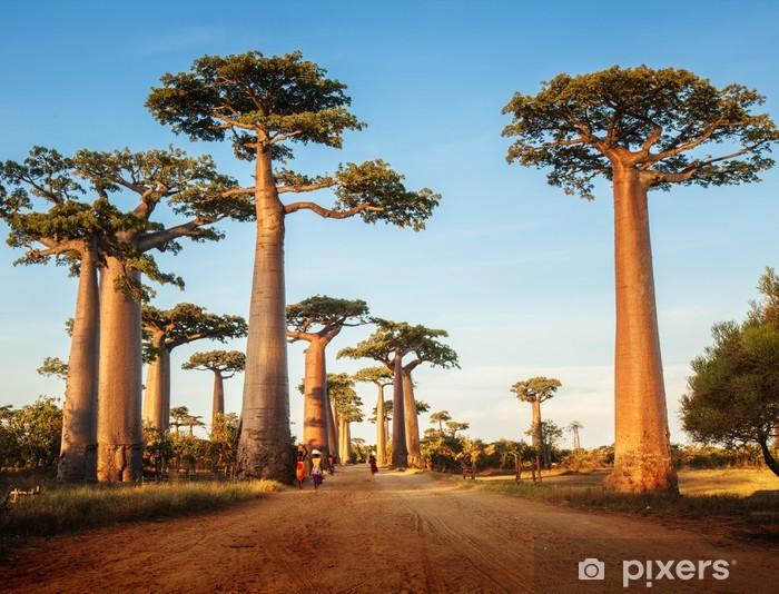 Fototapeta winylowa Baobabs - Tematy