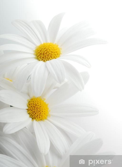 Fototapeta winylowa Białe wiosna Marguerite - Tematy
