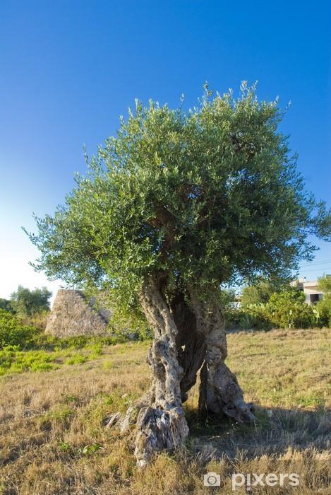 Fototapeta winylowa Oliwkowy - Drzewa