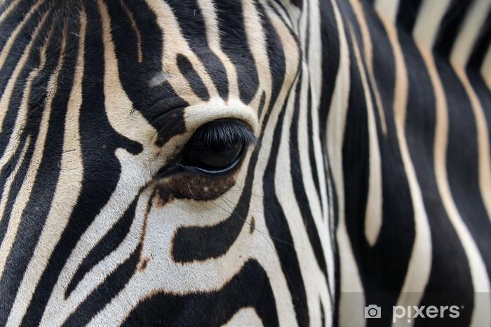 Vinylová fototapeta Close-up zebra hlavy a těla - Vinylová fototapeta