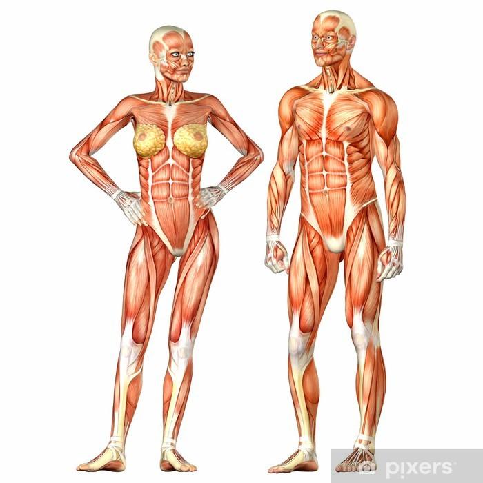 Fonkelnieuw Poster Menselijk Lichaam Anatomie - Mannelijke en Vrouwelijke PL-45