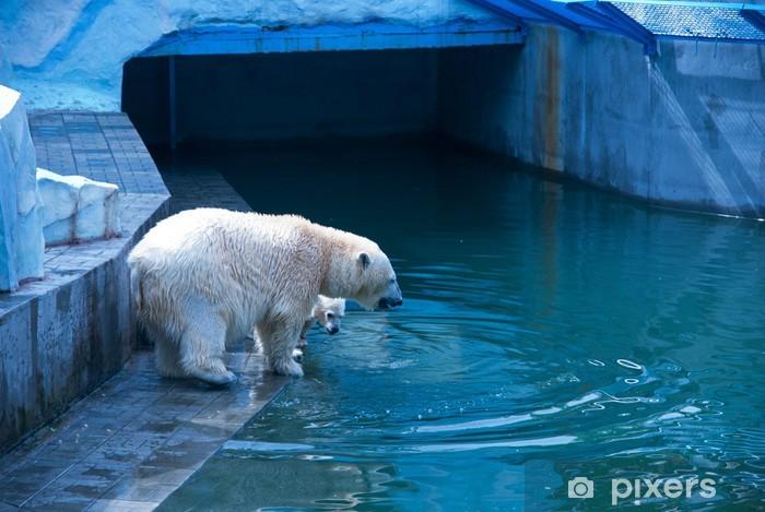 Naklejka Pixerstick Białe niedźwiedzie - Tematy
