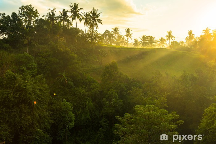 Fototapeta winylowa Wschód słońca nad dżungli - Tematy