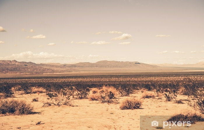 Afwasbaar Fotobehang Zuidelijke woestijn van Californië - Woestijn