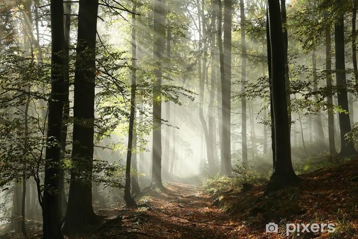 Fototapeta winylowa Leśna droga otoczona mgłą w słońcu - Lasy