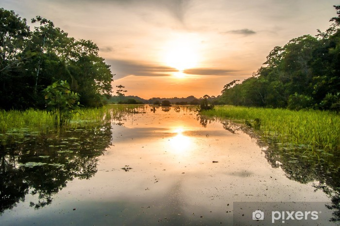 River in the Amazon Rainforest at dusk, Peru, South America Vinyl Wall Mural - Brazil