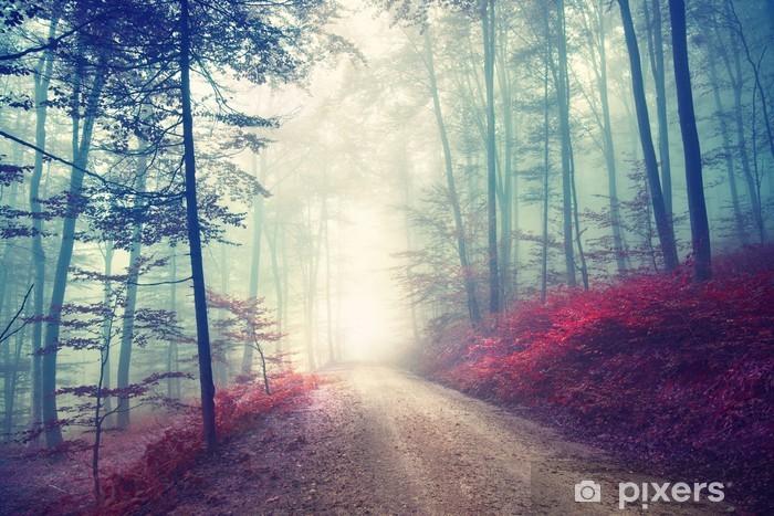Afwasbaar Fotobehang Magisch bospad - Bossen