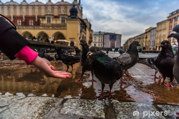 Fototapeta winylowa Wiele gołębi w centrum Krakowa. - Europa