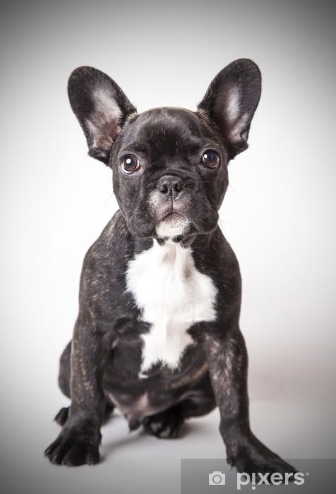 Vinilo para Nevera Retrato de bulldog francés bebé - Bulldogos francéses