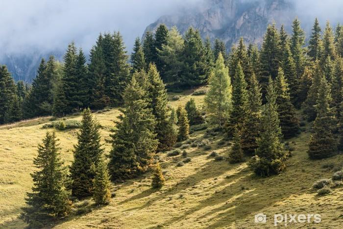 Naklejka Pixerstick Świerki rosnące na alpejski łąki - Drzewa