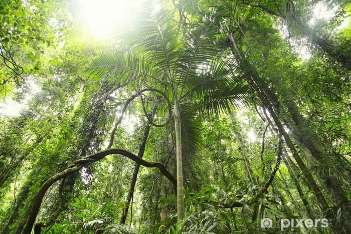 Naklejka Pixerstick Lasów tropikalnych - Lasy