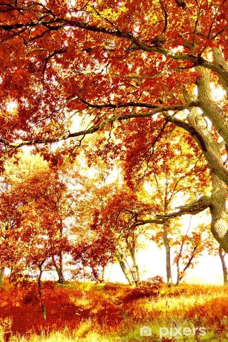 foto de Papier peint Fond d'écran paysages forestiers d'automne • Pixers ...