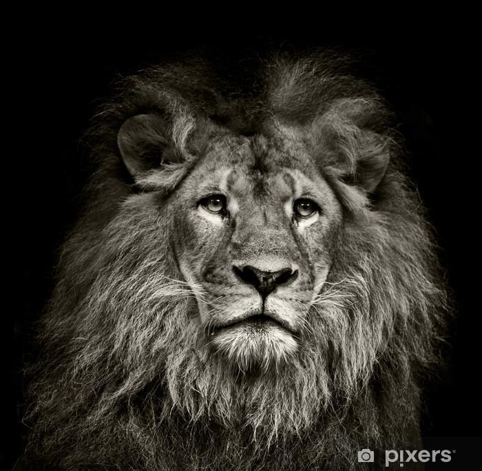 sad lion Framed Poster - Themes