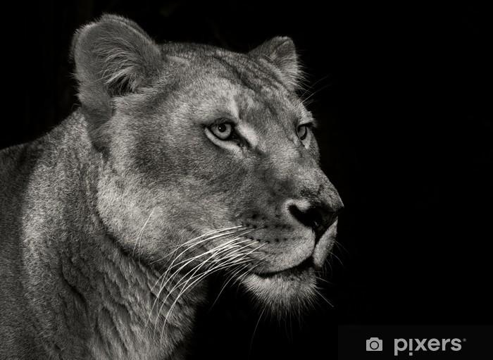 Masa Çıkartması Kibirli dişi aslan -