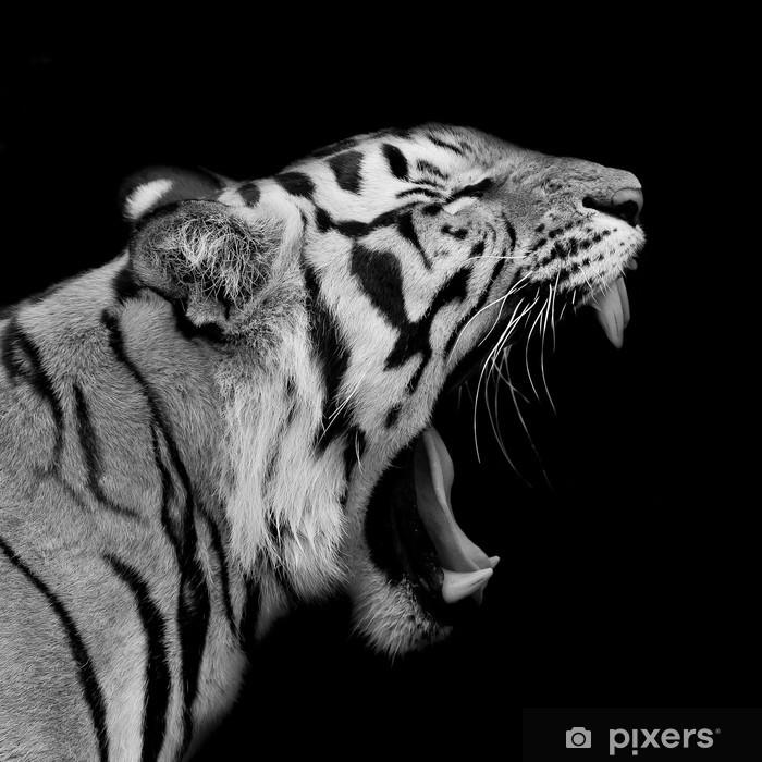 Sumatran Tiger Roaring Framed Poster - Destinations