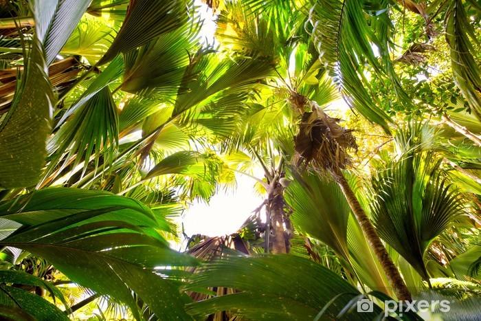 Tropisk regnskov i Valle de Mai, Praslin, Seychellerne Vinyl fototapet -