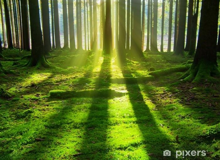Fototapeta winylowa Słońce w lesie. - Krajobrazy