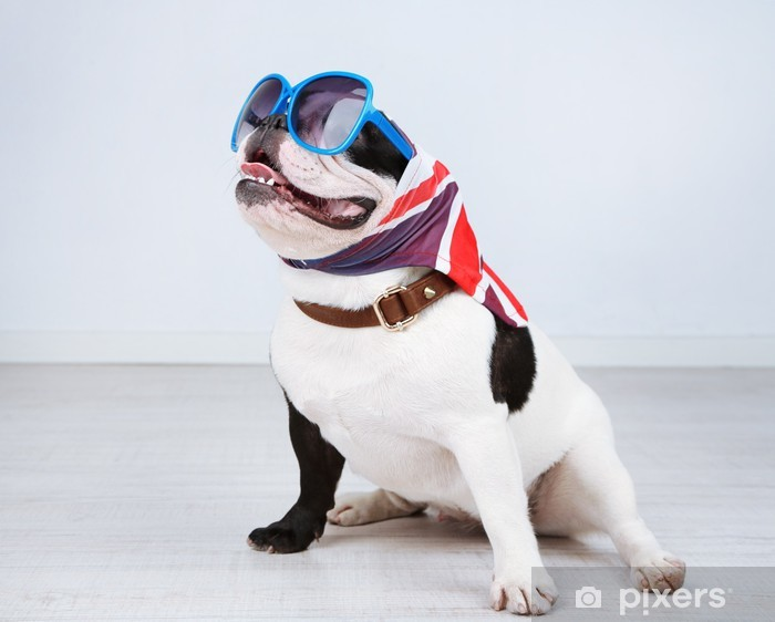 Vinilo Pixerstick Bulldog francés con gafas de sol en la habitación - Bulldogos francéses
