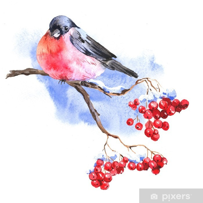 Winter Watercolor background with bullfinches Pixerstick Sticker - Animals
