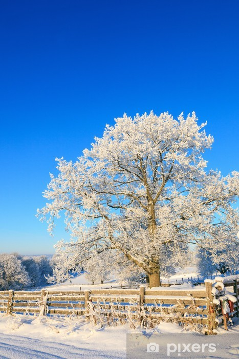 Papier peint vinyle Chêne en hiver - Saisons