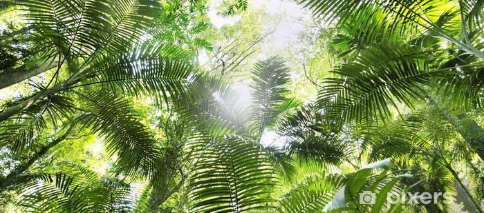 Regenwald Vinyl fototapet - Natur og Vildmark