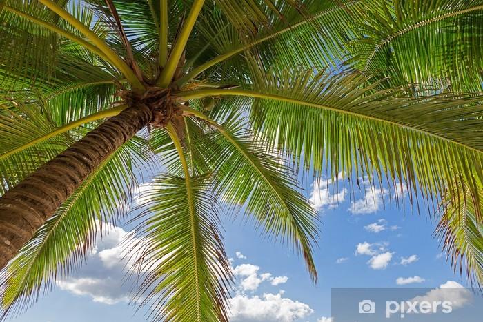 Fototapeta winylowa Pod palmą - Plaża i tropiki