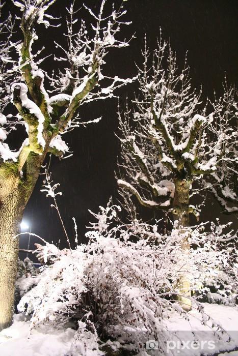 Vinyl-Fototapete Wald in nacht - Urlaub