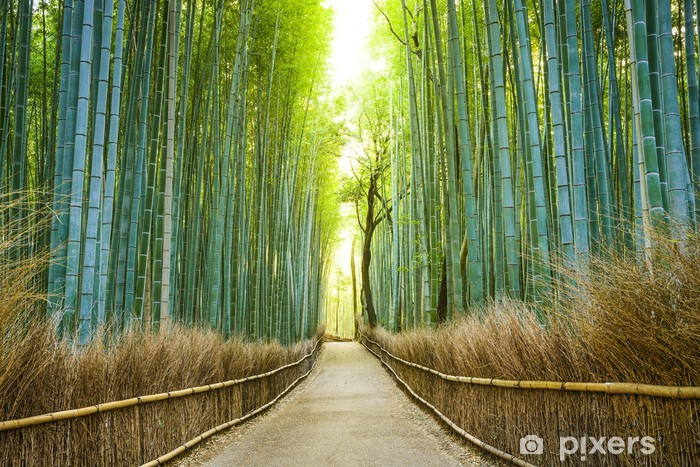 Kyoto, Japan Bamboo Forest Self-Adhesive Wall Mural - iStaging