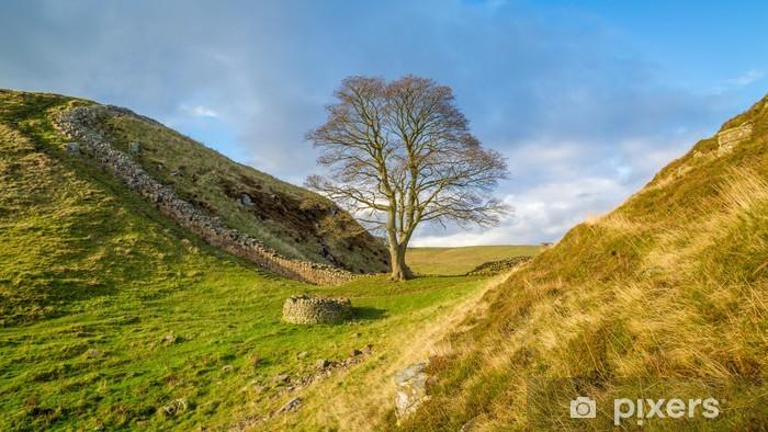 Fototapeta winylowa Jawor szczeliny na ścianie Hadriana w Northumberland - Rolnictwo
