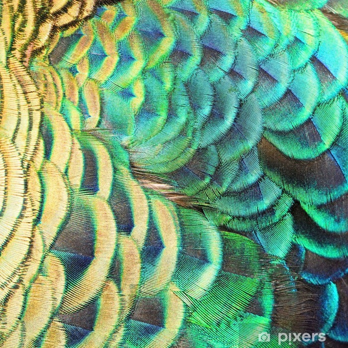 Papier peint vinyle Plumes de paon vert - Matières premières