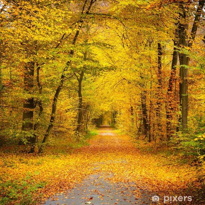 Fototapeta winylowa Jesienny las - Tematy