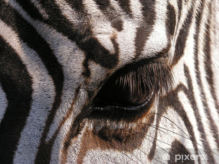 Fototapet av Vinyl Zebra - närbild på ögat - Teman