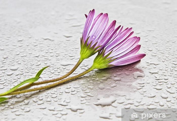 Papier peint vinyle Margaritas mojadas - Fleurs