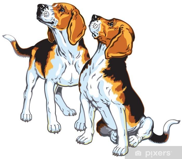 Papier peint vinyle Deux beagles - Mammifères
