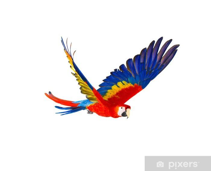 Papier peint vinyle Perroquet volant coloré isolé sur blanc - Nature