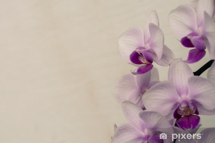 Vinylová fototapeta Pink Orchid - Vinylová fototapeta