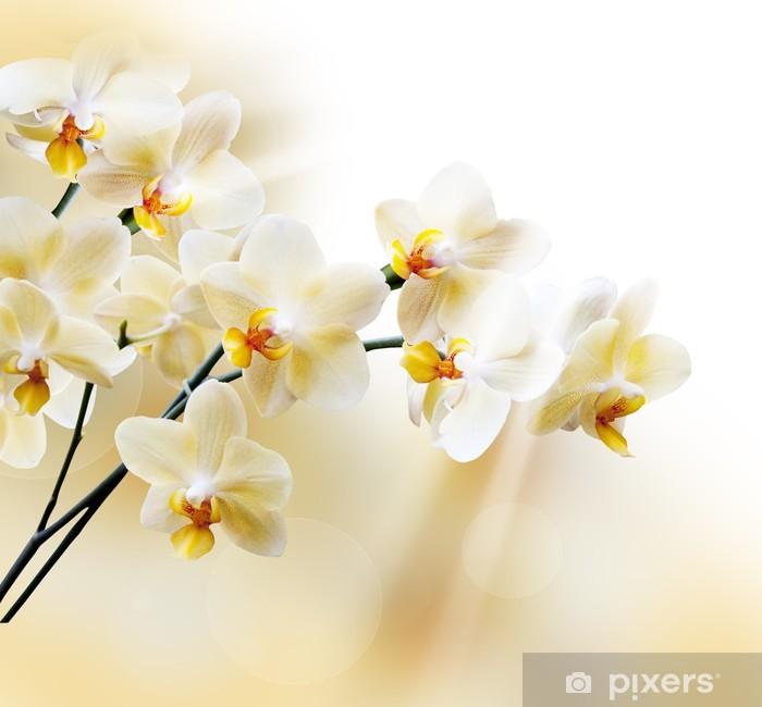 Fototapeta winylowa Piękna biała orchidea - Tematy