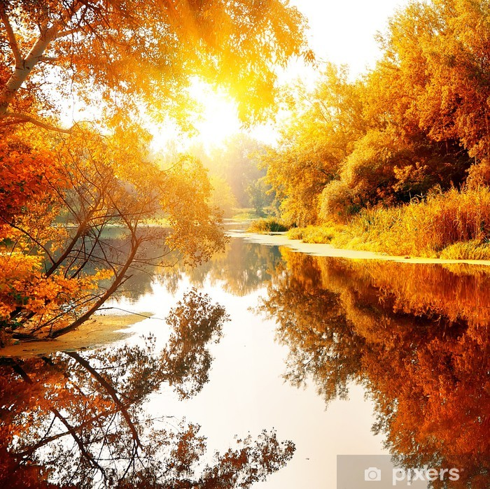 River in a delightful autumn forest Vinyl Wall Mural - Themes