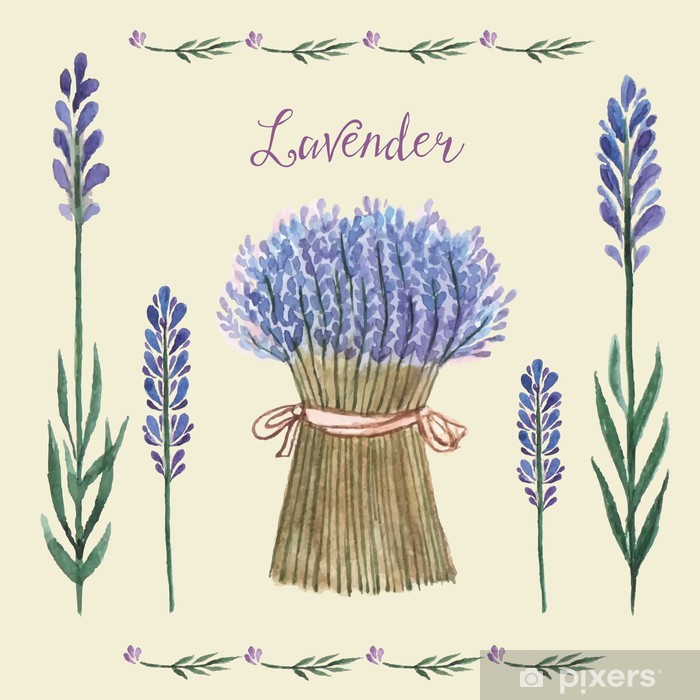 Poster Lavande aquarelle. - Plantes