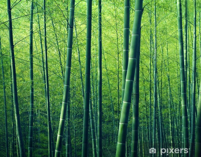 Zelfklevend Fotobehang Bamboo Forest Trees Nature Concept - Thema's
