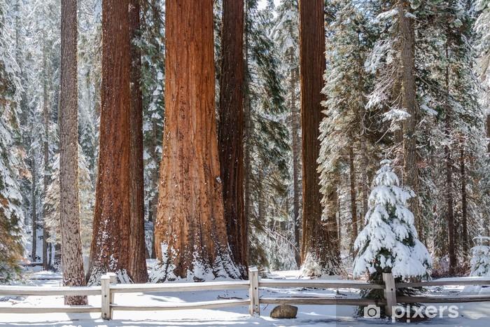 Vinyl-Fototapete Giant Sequoia Grove - Amerika