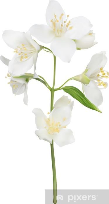 Papier peint vinyle Illustration de blanc isolé jasmin branche - Fleurs
