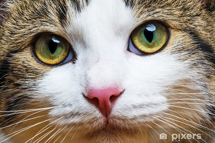 zblízka fotografie černé kočička