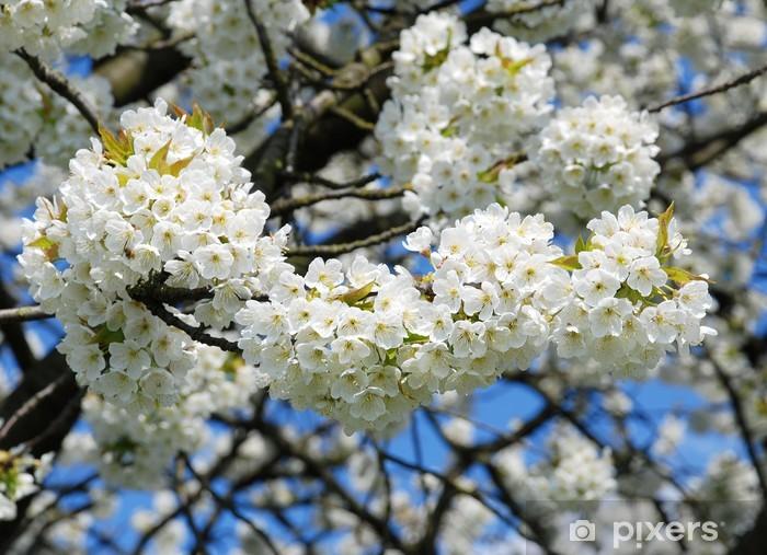 Pixerstick Aufkleber Herrliche Baumblüte - Jahreszeiten