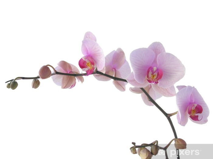 Mazzo Di Fiori Orchidee.Carta Da Parati Mazzo Di Orchidee Con I Fiori Lila Pixers