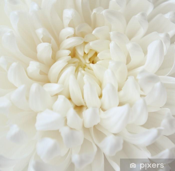 White Chrysanthemum Flower Wall Mural Pixers We Live To Change