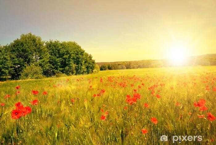 Carta da parati campo di grano con papaveri rossi al tramonto