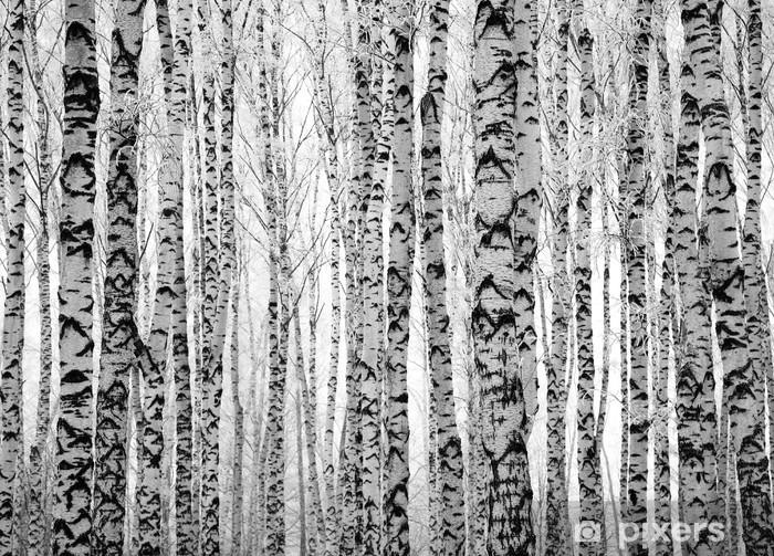 Carta da Parati in Vinile Inverno tronchi betulle - Temi