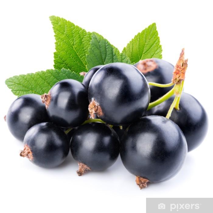 svarta vinbär engelska